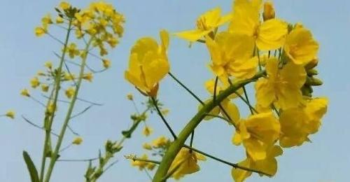 生态朴实的花
